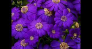 اجمل ورود العالم , احلى انواع الورود فى العالم