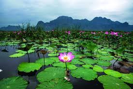 صورة جمال الطبيعة , الطبيعة جميله جدا