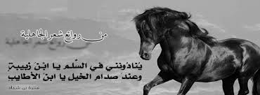 بالصور شعر عن الخيل , اجمل ابيات الشعر تصف جمال الخيل 2758 3