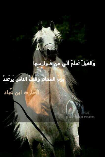 بالصور شعر عن الخيل , اجمل ابيات الشعر تصف جمال الخيل 2758 4