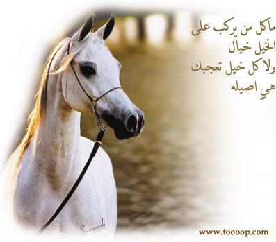 بالصور شعر عن الخيل , اجمل ابيات الشعر تصف جمال الخيل 2758 5