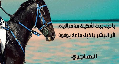 بالصور شعر عن الخيل , اجمل ابيات الشعر تصف جمال الخيل 2758 8