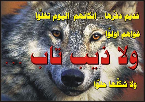 بالصور شعر شعبي ليبي , اجمل ابيات الشعر باللهجة الليبية 2771 9