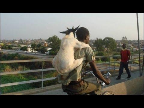 بالصور مواقف مضحكة جدا , فيديوهات لمواقف الحيوان والاطفال 2911
