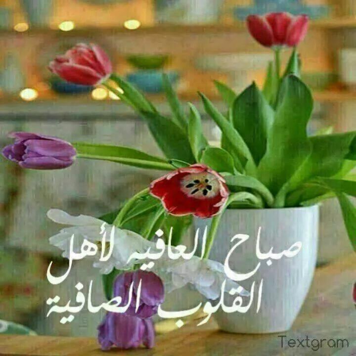 صور صباح الخير ياعرب , اجمل تحيات الصباح لجميع العرب