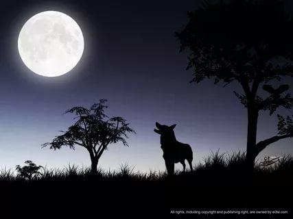 بالصور صور للقمر , احلى الصور لمراحل تكون القمر 2945 9