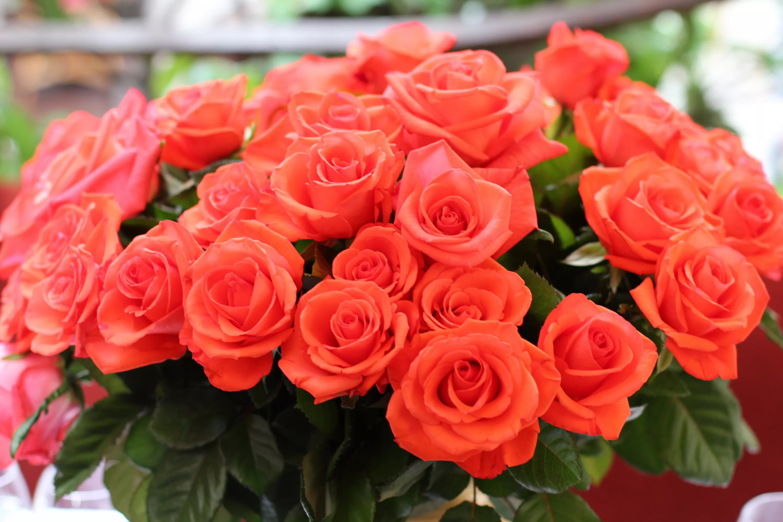 بالصور احلى صور ورد , اجمل باقات ورد رائعة 2986 2