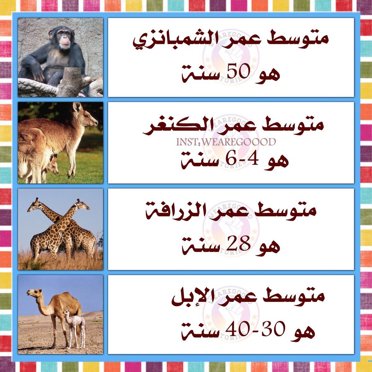 صورة معلومات عن الحيوانات , معلومات غريبه جدا عن الحيوانات 3744 1