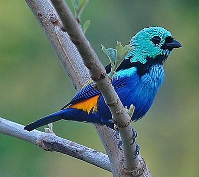 صورة اجمل طيور العالم , معلومات عن الطيور