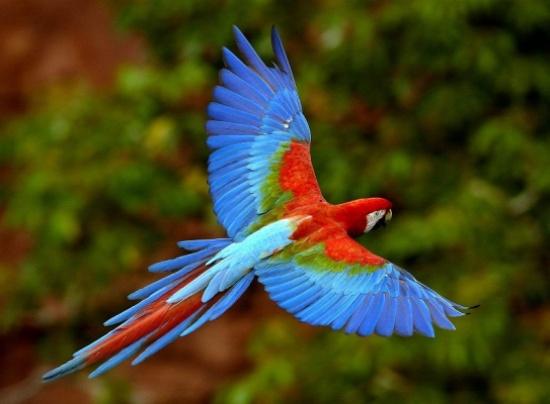 بالصور اجمل الطيور في العالم , طيور سبحان الله 4249 2