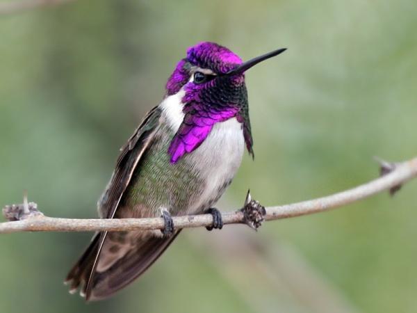 بالصور اجمل الطيور في العالم , طيور سبحان الله 4249 3