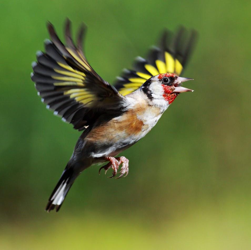 بالصور اجمل الطيور في العالم , طيور سبحان الله 4249 4