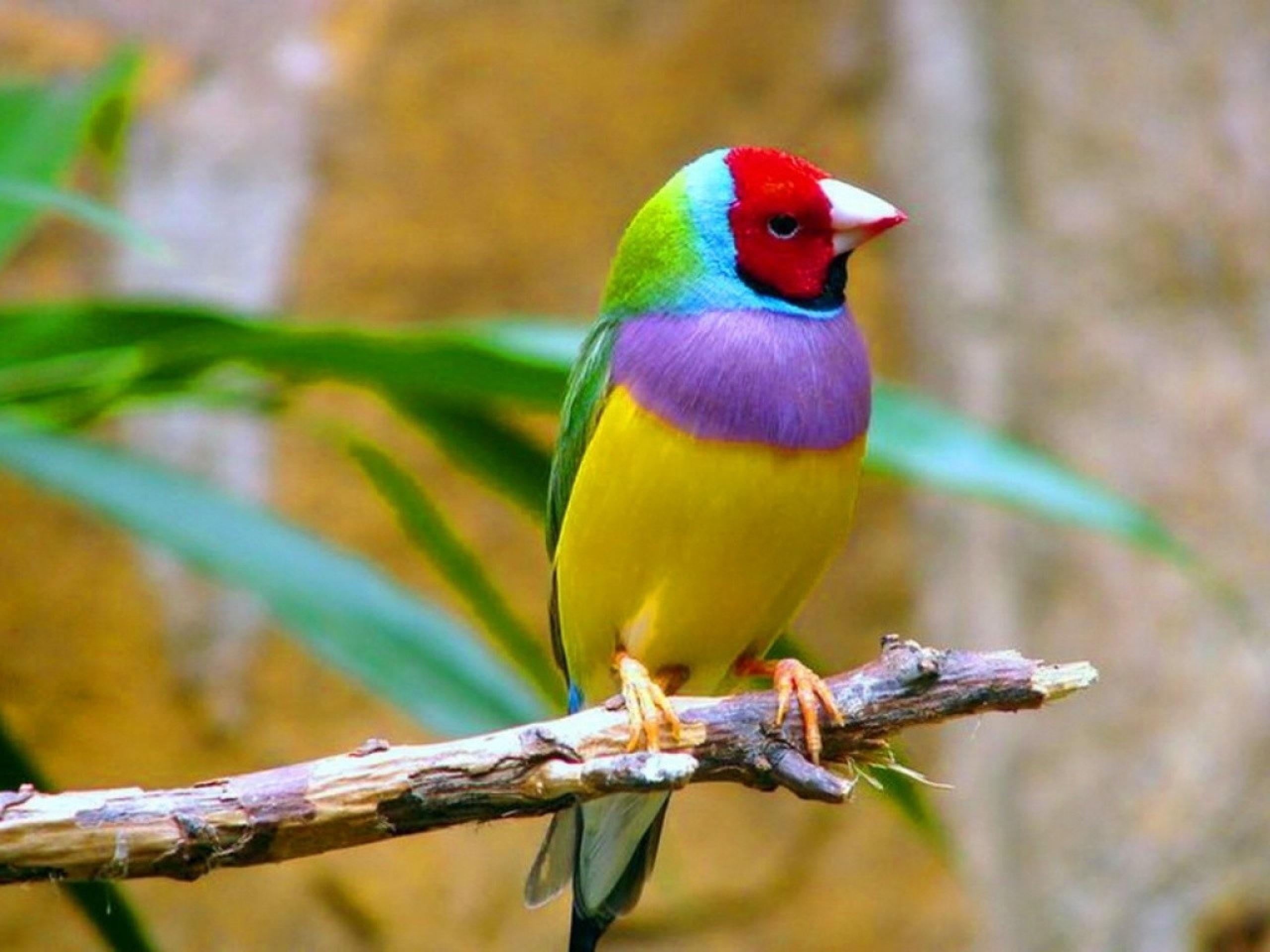 بالصور اجمل الطيور في العالم , طيور سبحان الله 4249 6