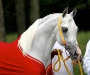 بالصور زمن الخيول البيضاء , صور لخيول بيضاء تحفة 3613 14