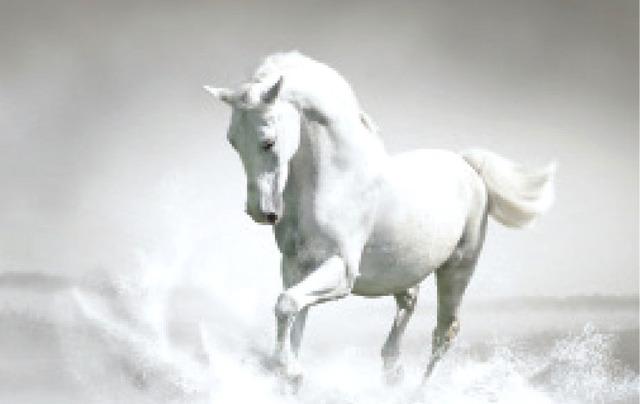 بالصور زمن الخيول البيضاء , صور لخيول بيضاء تحفة 3613 16