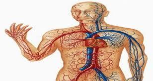 صورة جسم الانسان بالصور , اعرف جسمك بالتفصيل