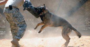 صوره كيفية تدريب الكلاب , علم كلبك الطاعة