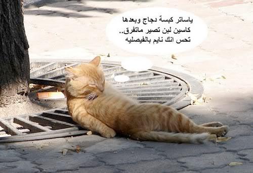 بالصور صور تموت من الضحك , اروع الصور الكومديه 1002 1