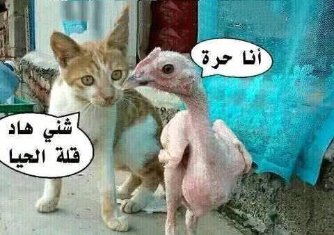 بالصور صور تموت من الضحك , اروع الصور الكومديه 1002 11