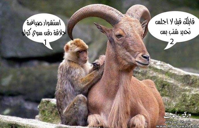 بالصور صور تموت من الضحك , اروع الصور الكومديه 1002 2