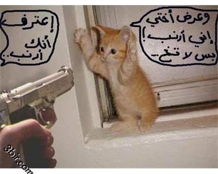 بالصور صور تموت من الضحك , اروع الصور الكومديه 1002 7