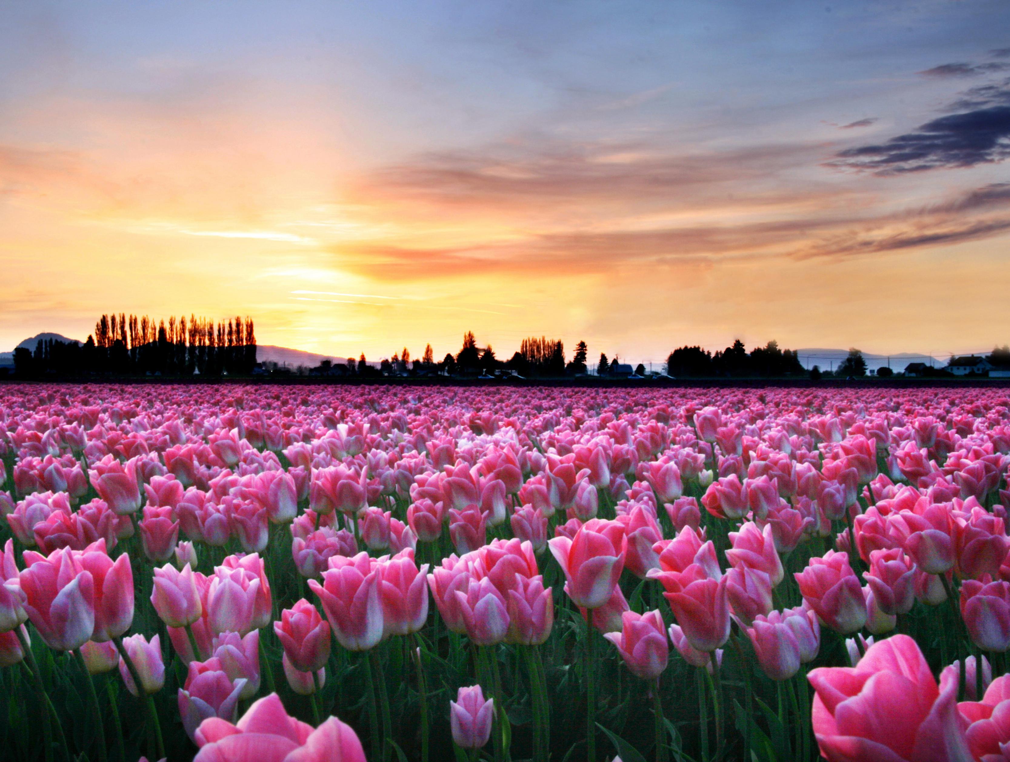 صور صور فصل الربيع , اجمل خلفيات كمبيوتر وهواتف من فصل الربيع