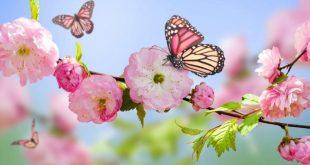 صورة صور فصل الربيع , اجمل خلفيات كمبيوتر وهواتف من فصل الربيع