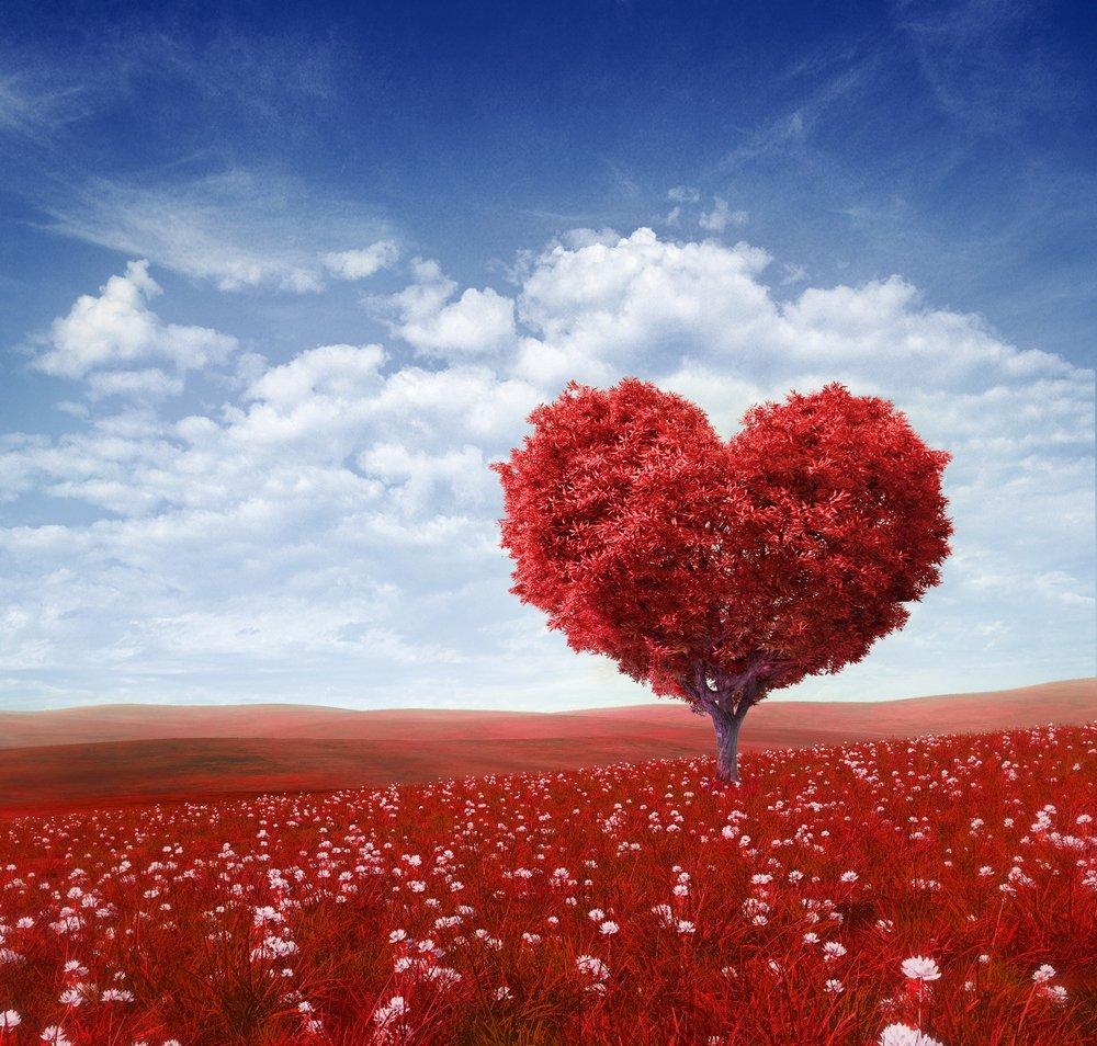 صور ما معنى الحب , ماهو معاني الحب الحقيقي