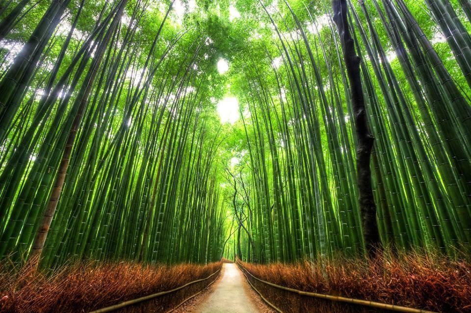 صور صور اشجار , صور روعة للاشجار