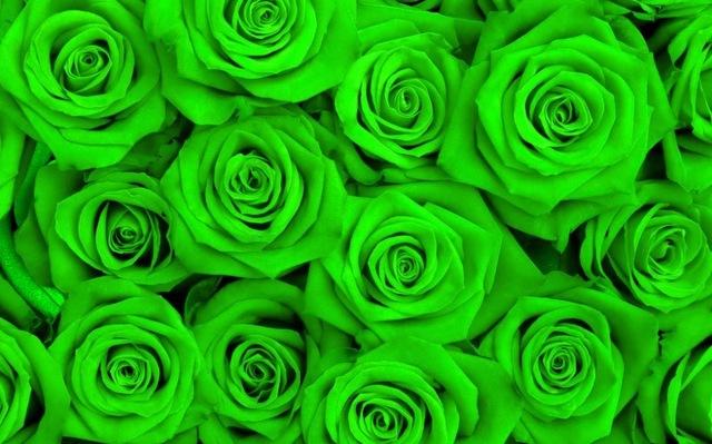 صور خلفية خضراء , ماذا يعني لك اللون الاخضر