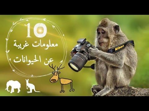 صورة معلومات عامة مفيدة , معلومات متنوعه عن الحيوانات