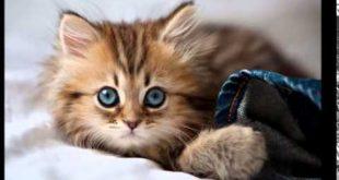 صور صور قطط صغيرة , قطط حديثة الولاده
