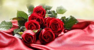 ورود جميلة , اجمل صور الورود فى العالم