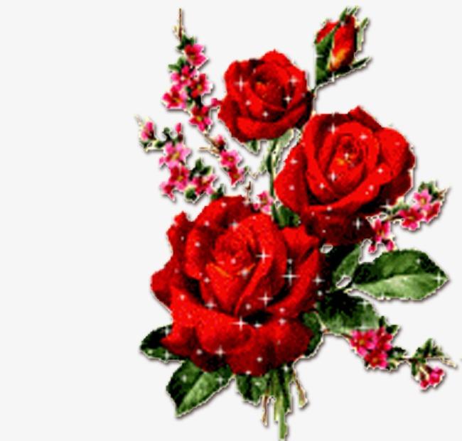 بالصور ورود جميلة , اجمل صور الورود فى العالم 500 2