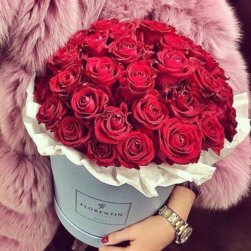 بالصور ورود جميلة , اجمل صور الورود فى العالم 500 5