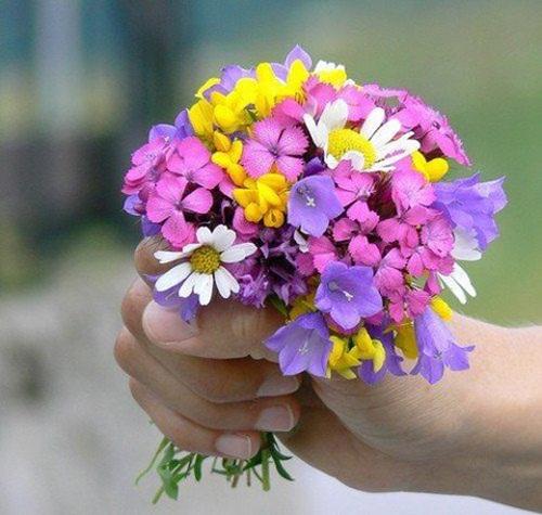 بالصور ورود جميلة , اجمل صور الورود فى العالم 500 6