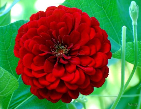 بالصور ورود جميلة , اجمل صور الورود فى العالم 500 8