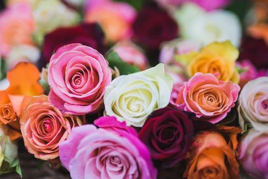 بالصور ورود جميلة , اجمل صور الورود فى العالم