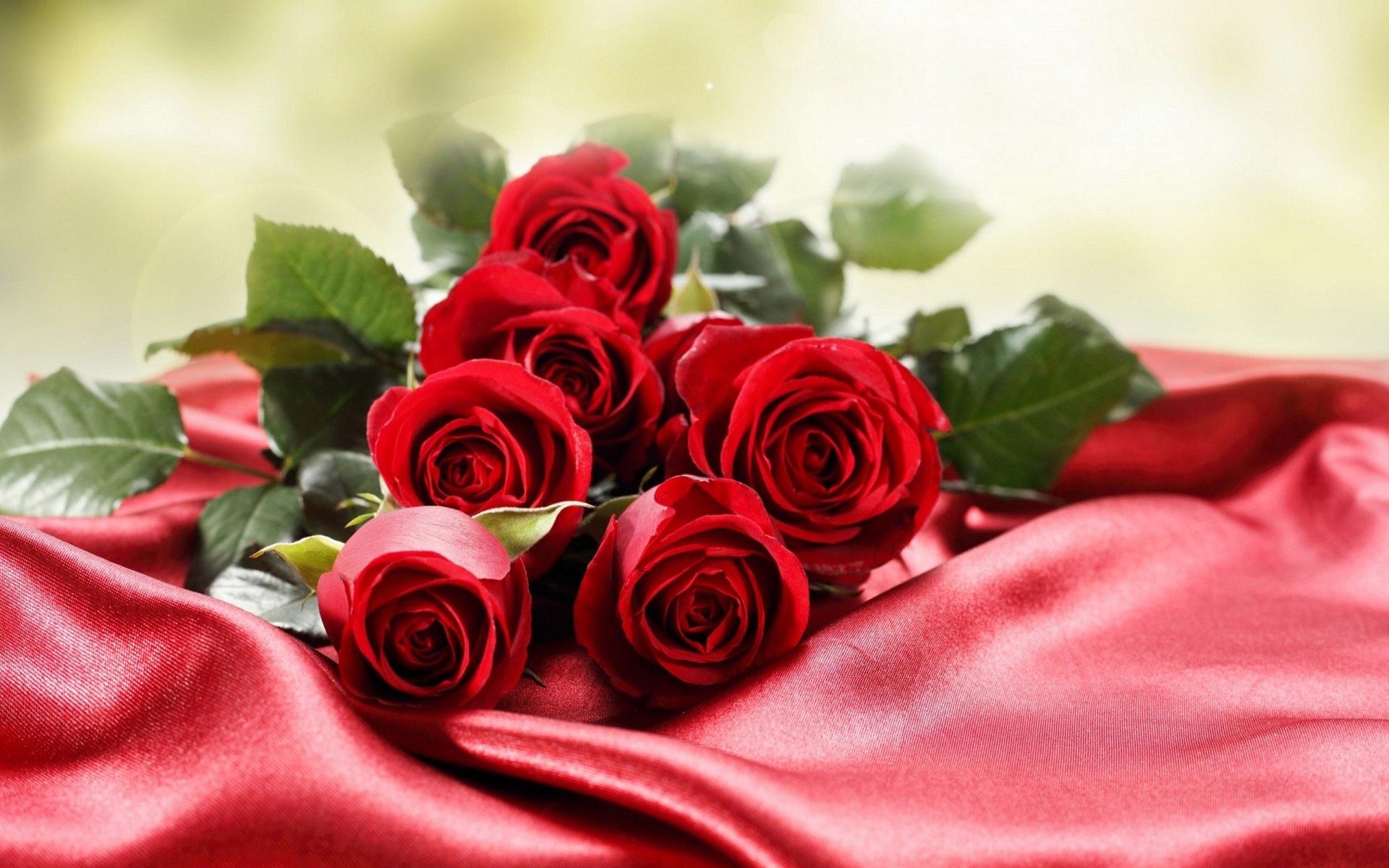 بالصور ورود جميلة , اجمل صور الورود فى العالم 500