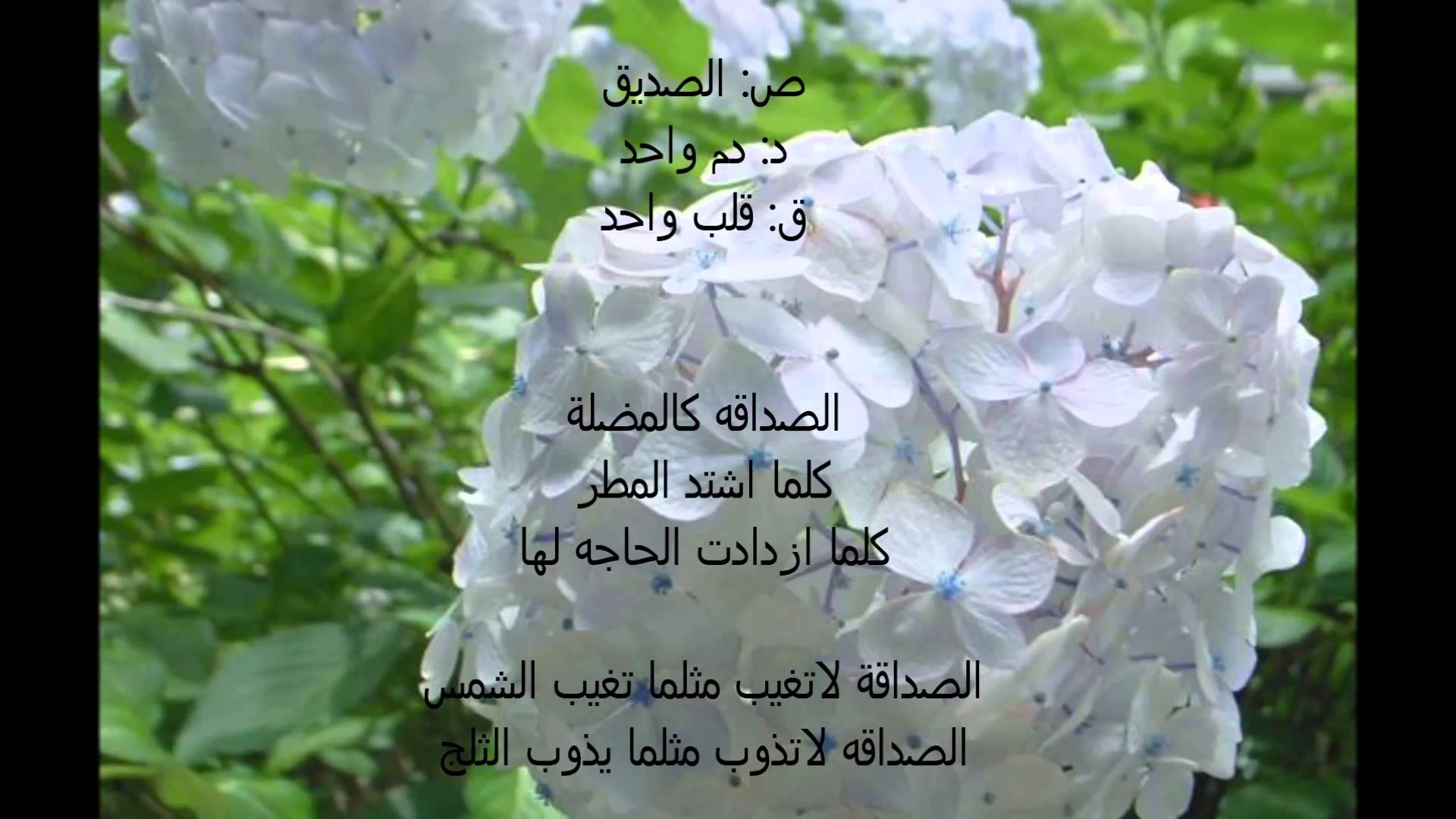 صورة اجمل ماقيل عن الصداقة , صديق حقيقي خير من الدنيا