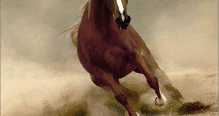 صورة خيول عربية اصيلة , اهم المعلومات عن الخيل العربي الاصيل
