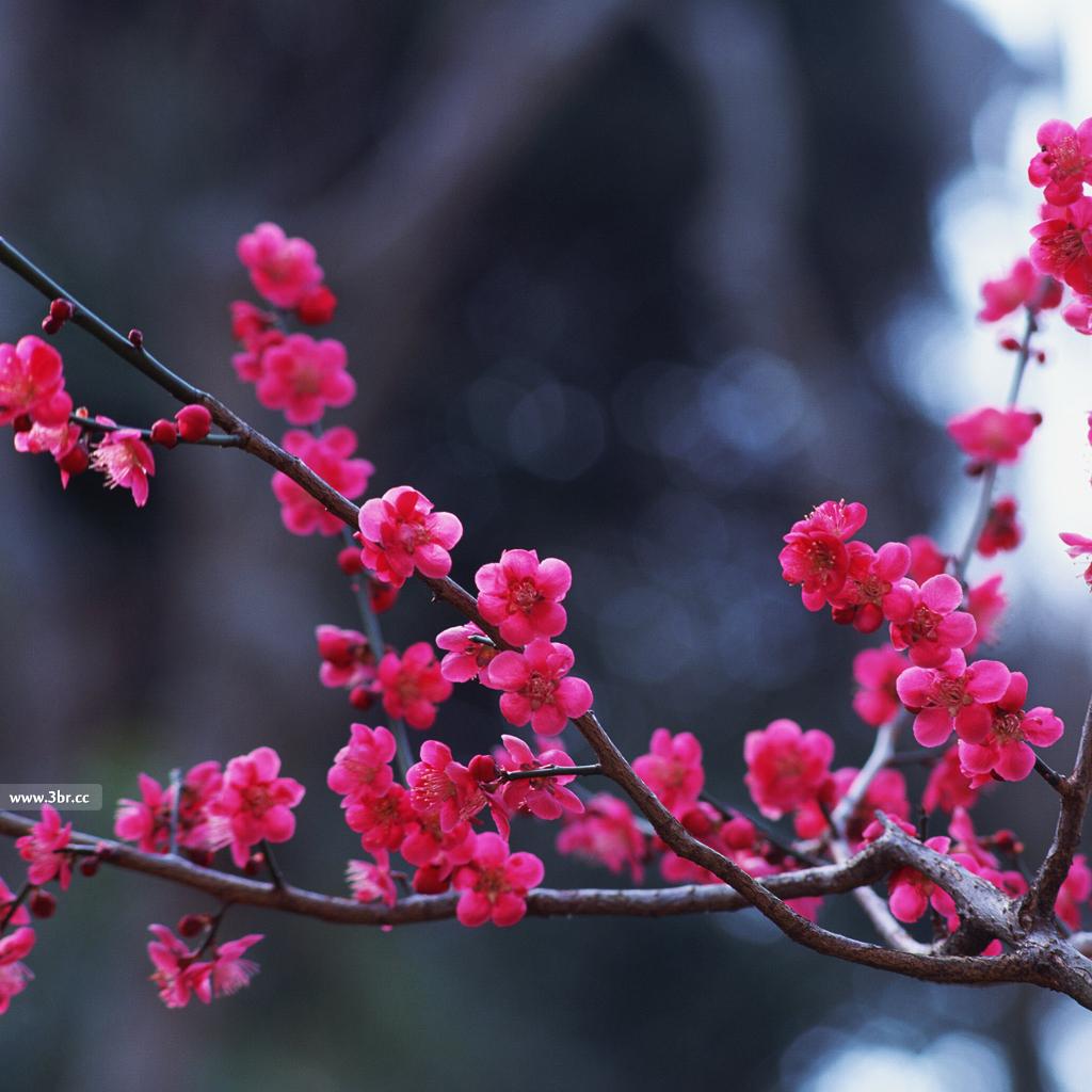 بالصور صور خلفيات روعه , اجمل صور خلفية جميلة 744 11