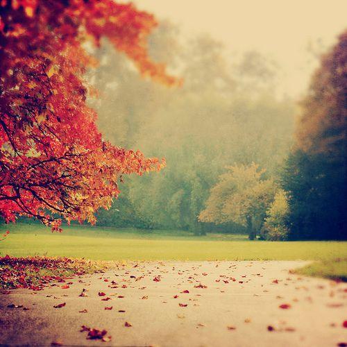 بالصور صور خلفيات روعه , اجمل صور خلفية جميلة 744 7