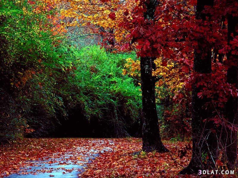 بالصور صور خلفيات روعه , اجمل صور خلفية جميلة 744 8
