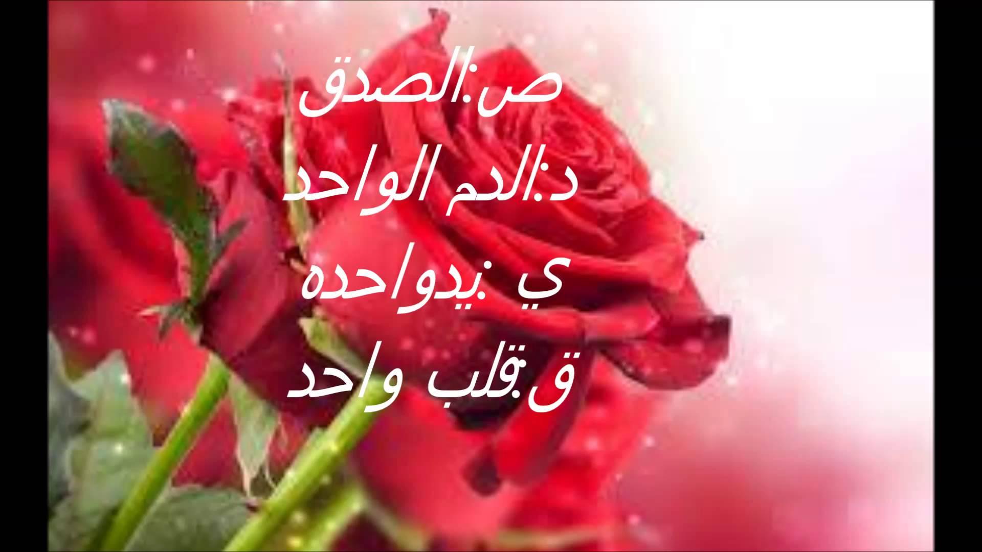 بالصور كلمات من ورود , اروع صور الورد المكتوب عليها عبارات جميلة 746 14