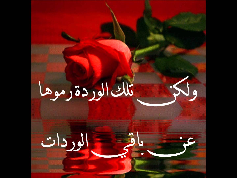 بالصور كلمات من ورود , اروع صور الورد المكتوب عليها عبارات جميلة 746 2