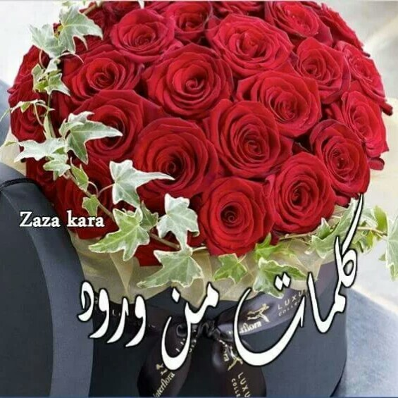 بالصور كلمات من ورود , اروع صور الورد المكتوب عليها عبارات جميلة 746 3