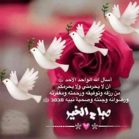 بالصور صباح الورد والفل , اروع الصور مكتوب عليها كلمات صباحيه 772 14