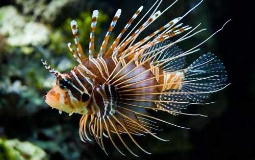 صوره معلومات عن الاسماك , معلومات هامه عن انواع الاسماك