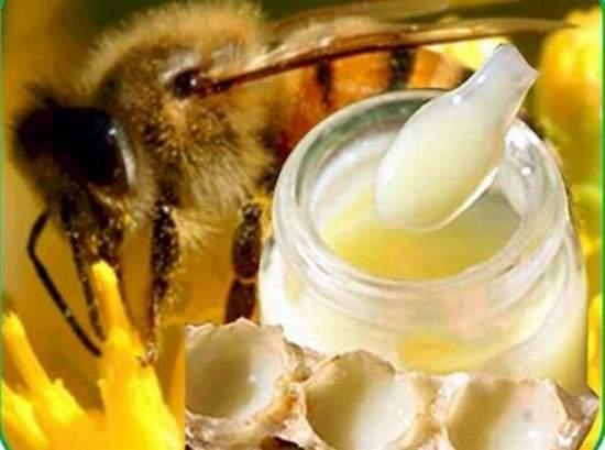 بالصور فوائد غذاء ملكات النحل , ماهى الفوائد الغذائيه لملكات النحل 796 2